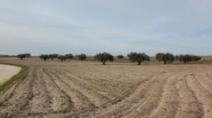 Finca rustica agrícola en venta Navalcarnero ID 348VP